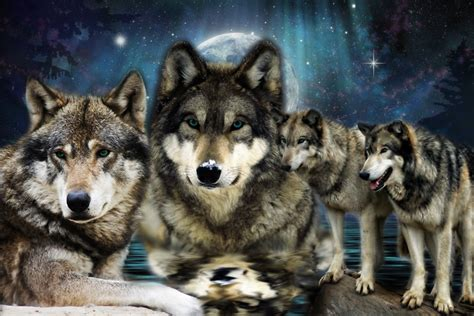 of a wolf pack of wolves wallpaper wallpapersafari