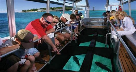 glass bottom boat tour cairns glass bottom boat tours great barrier reef