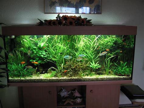 aquarium ideen habt ihr ideen zur umgestaltung aquarium forum