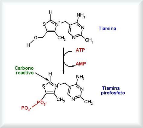 tiamina alimenti sapientemente tiamina vitamina b1 cos 232 e cosa provoca