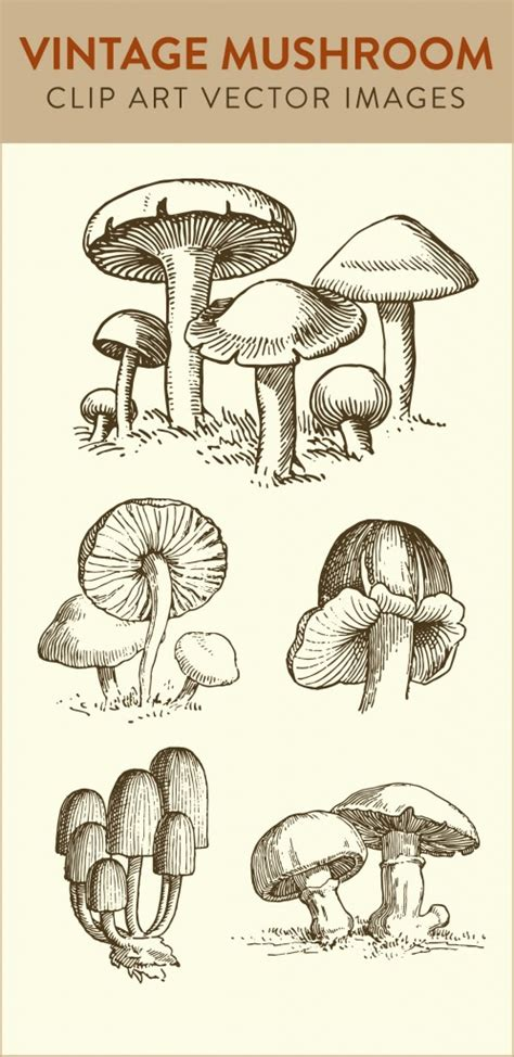 stock images vintage mushroom clip art   nifty