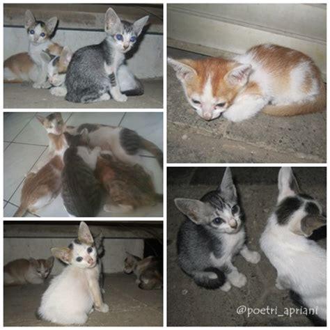 Odong Odong Dongeng Kucing Anjing gambar fabel kucing desa kota gambar di rebanas rebanas