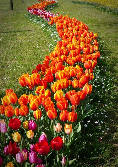 fiori prato fiori prato