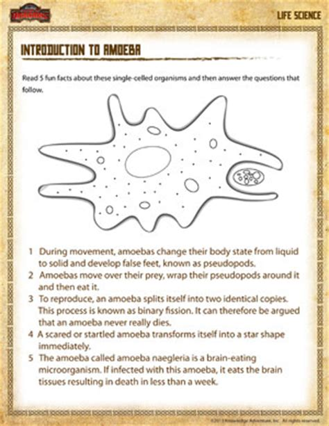 Free Fourth Grade Science Worksheets by Introduction To Amoeba Free Science Worksheet For