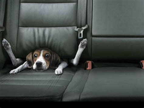 dog wallpapers wallpaper cave funny dog wallpapers wallpaper cave
