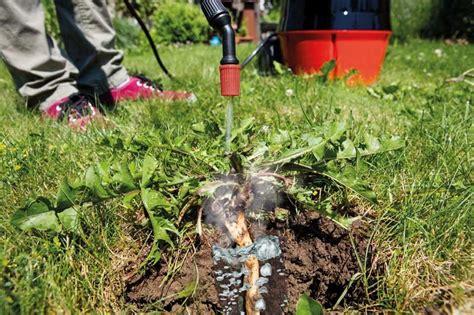 Rasen Ohne Unkraut 1500 by Scheppach Therbio Unkrautvernichtung Im Garten Nur Mit