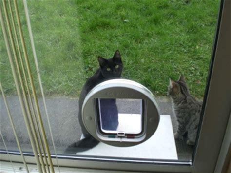 Glass Door Cat Flap Cat Flaps In Colchester Colchester Cat Flaps