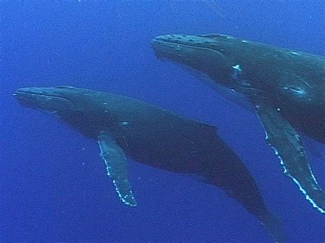 name for a of whales