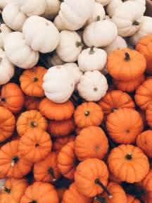 When To Plant Pumpkin Seeds For Halloween - best 25 fall backgrounds ideas on pinterest fall wallpaper phone backgrounds