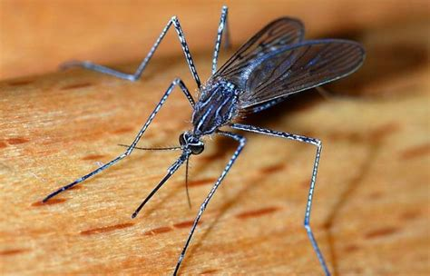do mosquitoes bite you more if you eat sweet foods and how
