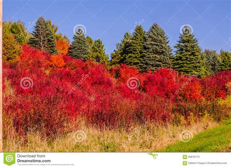 dramatic colors hillsside of dramatic color stock photo image 60818773