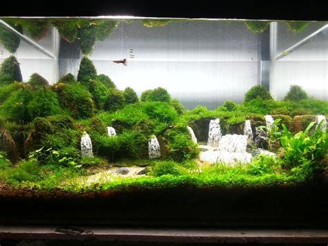 aquascape waterfall aquascape waterfall aquari sequa