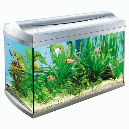 Mr Cleaner By Han Aquarium fish tanks designs