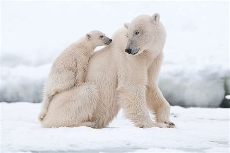 polar san diego zoo animals plants