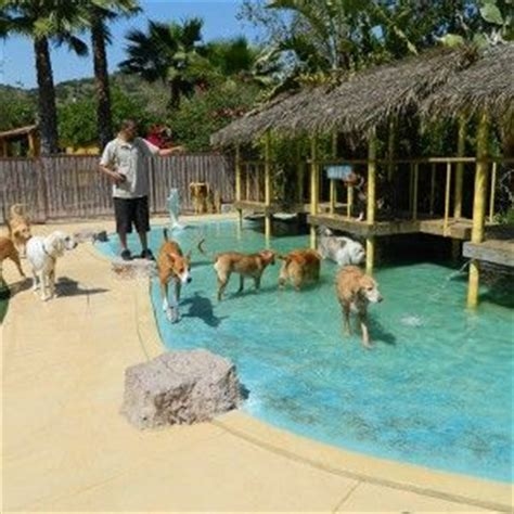 hotels that take dogs 25 best ideas about hotel on boarding hotels that take dogs and