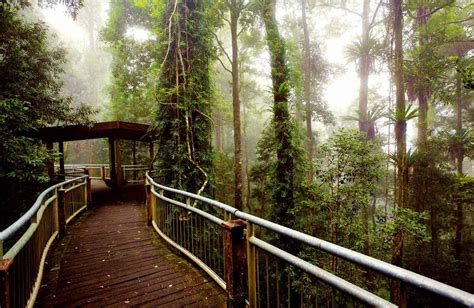 dorrigo national park nsw national parks