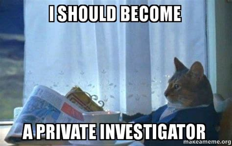 How To Become A Meme - i should become a private investigator sophisticated cat