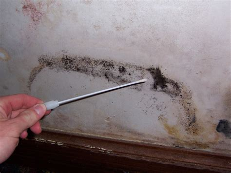 Home Mold Test by Should I Buy A House With Mold Problem How To Build A