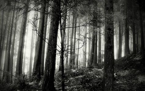black and white woodland wallpaper black forest wallpapers wallpaper cave