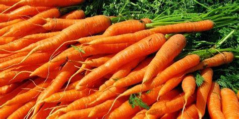 Benih Wortel Dari Cina 3 5 ton wortel ilegal tiongkok digerebek polisi kemasan
