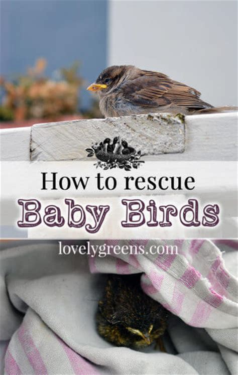 what to do with a rescued baby bird
