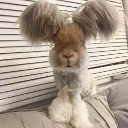 wally le lapin aux oreilles en forme d ailes d ange