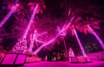 shows and lights busch gardens ta bay