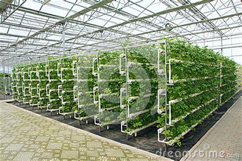 sle business plan greenhouse greenhouse stock photo image 45850132