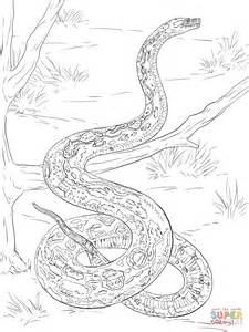 Boa Coloring Page Coloring Home Boa Constrictor Coloring Page