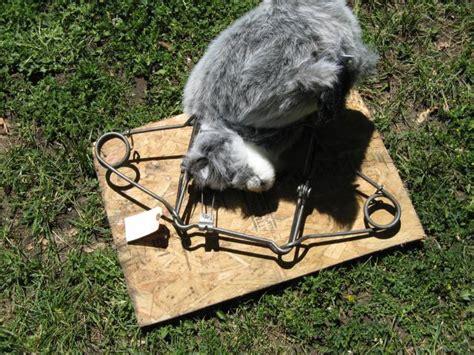 open conibear trap how to set conibear trap