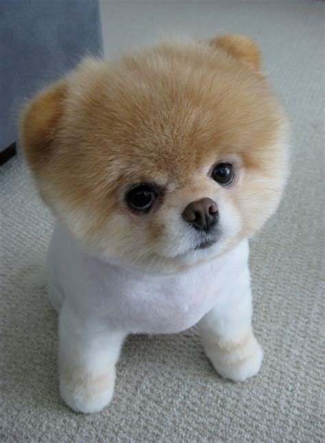 pictures of the cutest in the world the cutest in the world 2013 pet photos gallery ben2zzp2aq