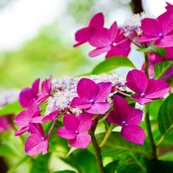 fiori lillà camomilla foto e vettori gratis