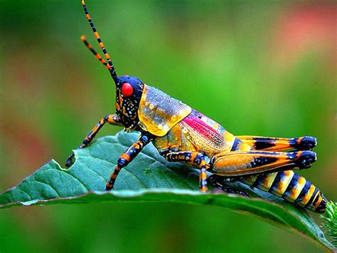 colorful insects colorful insect animals