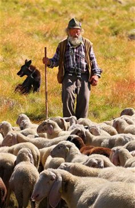 le berger near me 1000 images about sheep shepherds and sheep dogs on