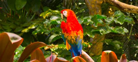 amazon rain forest parrot amazon travel 193 guia amazonas
