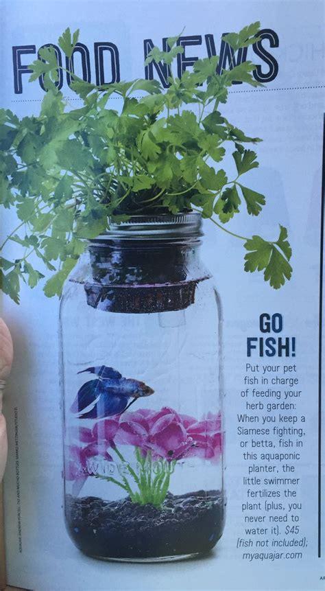 beta fish aquarium  mason jar small water gardens