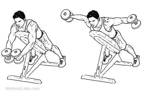incline bench dumbbell fly reverse flyes exercise google search health nut