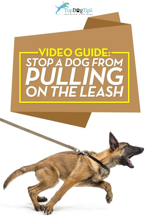 stop from pulling on leash how to stop a from pulling on leash 101 step by step guide