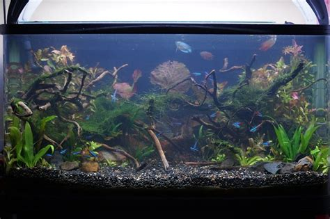 Lu Neon Akuarium 17 best images about aquarium vivarium paludarium on