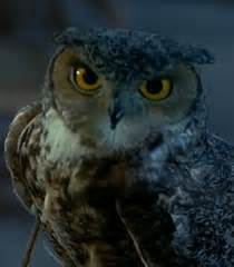 who is the voice of the owl on the eyeglasses commercials voice of owl dr dolittle behind the voice actors