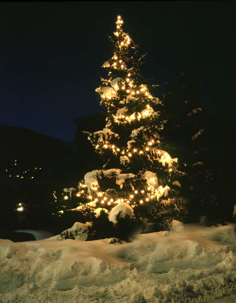 photo of christmas tree in snow free christmas images