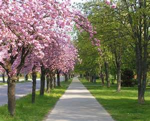 Beautiful Outside Spring Is Here It S So Beautiful Outside Welldone Blog