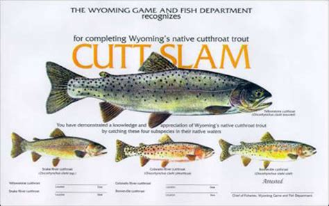 colorado boating required equipment wyoming game and fish department cutt slam