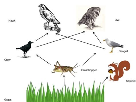 cane toad food web pictures to pin on pinterest pinsdaddy