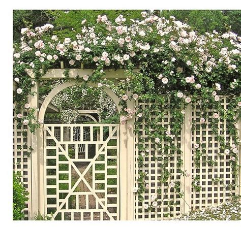 rose trellis plans rose arbor and trellis my garden plans pinterest