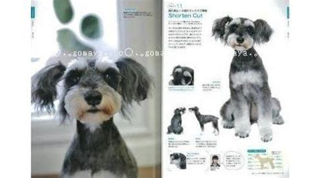 asian style schaunzer hair trim dog grooming quot schnauzer quot hair style arrange catalog