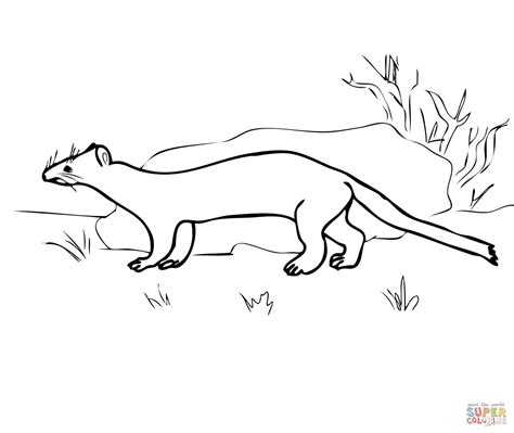 weasel coloring pages coloring pages