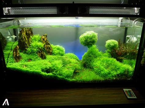 Layout Aquascape 画像 心を癒す 自宅に置きたいおしゃれなアクアリウム画像集 Naver まとめ