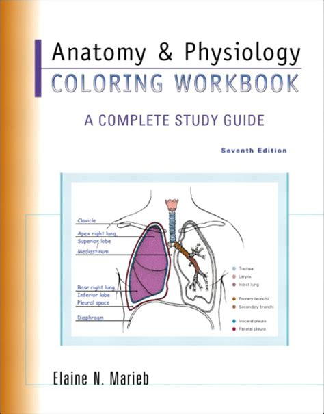 anatomy physiology coloring workbook marieb anatomy physiology coloring workbook a complete