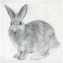 Backyard Bunnies How To Draw A Rabbit Jus 4 Kidz